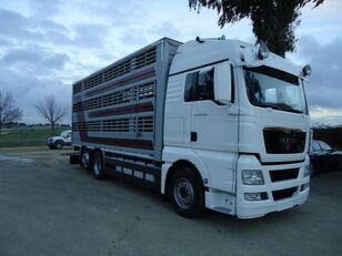 MAN TGX 26 480 Viehtransporter LKW